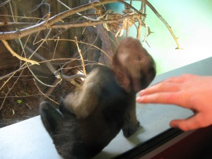 Louisa spent a while befriending this friendly Capuchin