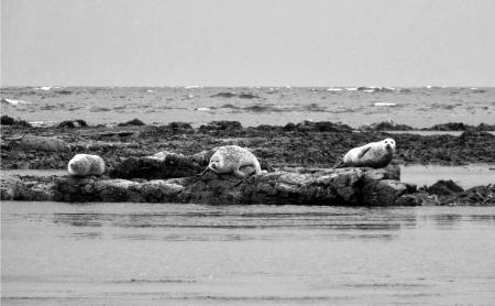 Some seals!