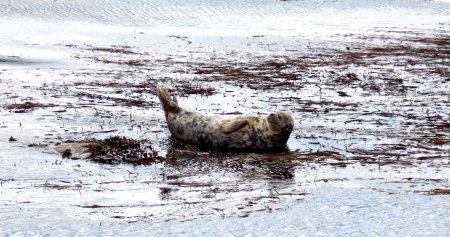 Happy relaxed Mr Seal!